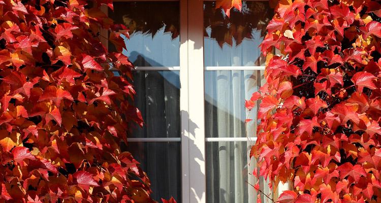 aislamiento-ventanas-laminas-solares
